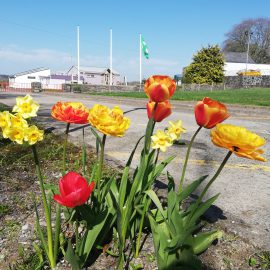 Flowers, litter picking and beautiful gardens