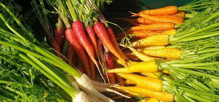 Farmers Market dates July and August
